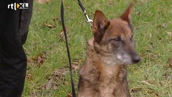 Editie NL Komt een vrouw bij de hond
