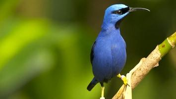Burgers' Zoo Natuurlijk - De Nectarvogels
