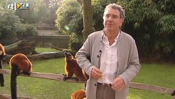 RTL Nieuws Een oase in de stad; Artis bestaat 175 jaar