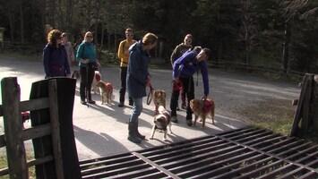 Honden TV Afl. 3
