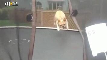Editie NL Hond vindt trampoline fantastisch