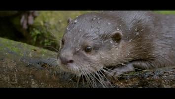 Burgers' Zoo Natuurlijk Dwergotter