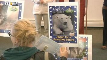 RTL Nieuws Ahpun de ijsbeer moet opvolger Obama worden