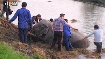 RTL Nieuws Circusolifant belandt in de sloot