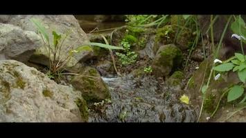 Burgers' Zoo Natuurlijk Vlinders