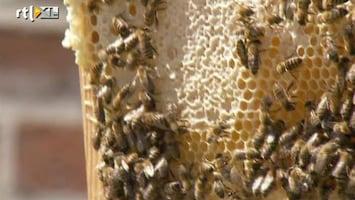 RTL Nieuws Berlijnse bijen op het dak