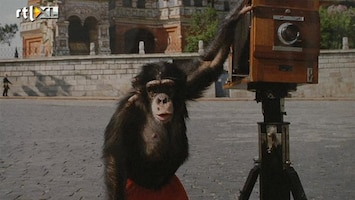 RTL Nieuws 'Chimpansee Mikki is een abstract impressionist'