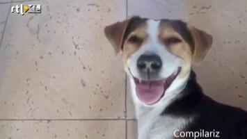 Editie NL Humor: dieren lachen zich rot