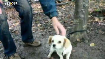 Editie NL Zielig: pup vastgebonden aan boom