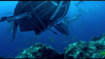 Piet Piraat Wonderwaterwereld De koraalduivel/doornenkroon