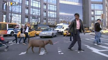 RTL Nieuws Dagje uit in New York met geit