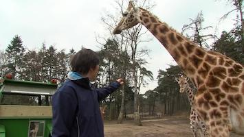 Burgers' Zoo Natuurlijk Afl. 1
