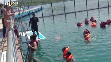 Editie NL Hitsige dolfijn wil bikini-broek