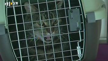 RTL Nieuws Ontsnapte kat vertraagt vliegtuig