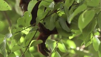 Wild Colombia - The Chocó - Colombia's Wild Coast