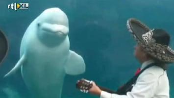 RTL Nieuws 'Dansende' walvis hit op internet