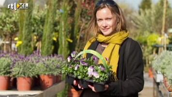 RTL Nieuws De tuintrends van deze lente