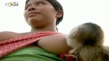 Editie NL Vrouw geeft aap de borst