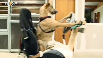 RTL Nieuws Honden krijgen rij-opleiding