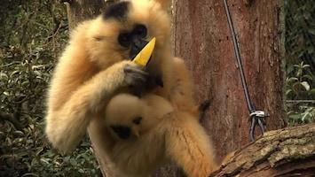 Uitgelicht - Afl. 22: Burgersâ' Zoo