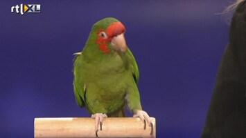 Het Beste Van Got Talent Worldwide Dat is een slimme papegaai