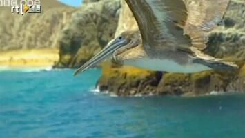 Editie NL Perspectief van een vogel
