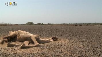RTL Nieuws Droogte is zelfs kamelen te veel