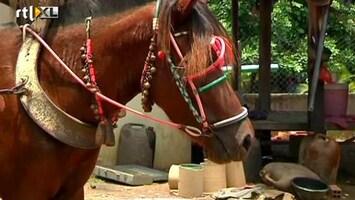 RTL Nieuws Mobiele pechhulp voor pony's