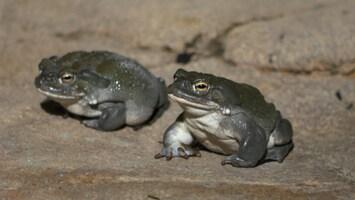 Burgers' Zoo Natuurlijk - De Coloradopad