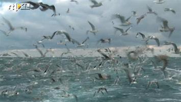 Editie NL Elk net een eigen vissersdorp