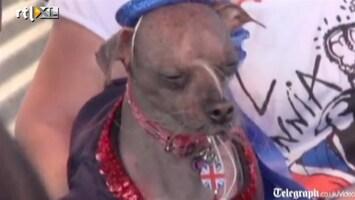 Editie NL De lelijkste hond ter wereld