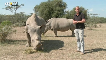 RTL Nieuws Onbemande vliegtuigjes tegen neushoorn-stropers