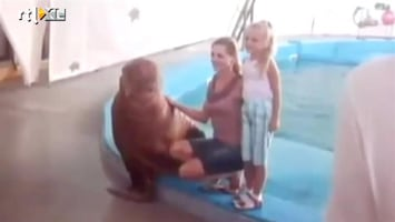 Editie NL Geile walrus gek op blondine