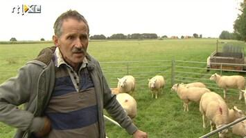 RTL Nieuws Slachtoffer schapendiefstal bezorgd over lot kudde