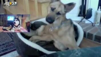 Editie NL Grappig: Skypende honden