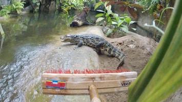 Burgers' Zoo Natuurlijk - De Breedsnuitkaaiman