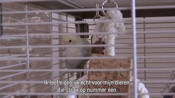 De Andere Kant Van Nederland Afl. 6