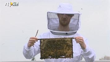 RTL Nieuws Steeds meer bijenkasten in de stad