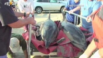 RTL Nieuws Elf aangespoelde dolfijnen gered