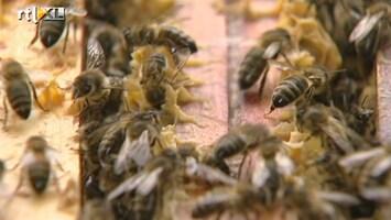 RTL Nieuws Luxe bijenhotels in centrum van Wenen