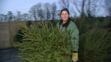 Na tien jaar weer en wind komt de kerstboom in de woonkamer