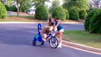 Editie NL Hilarisch: hond kan fietsen!