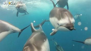 Editie NL Dolfijnen van dichtbij gefilmd