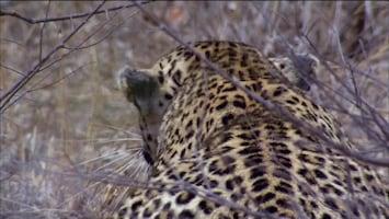 Timbavati: An Epic Cat Story - Tender Killers