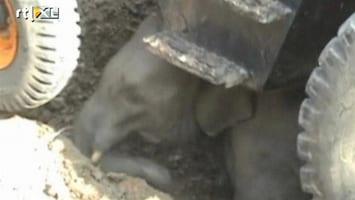 RTL Nieuws Olifantenjong gered uit waterput India