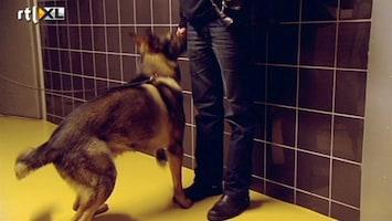 Buch In De Bajes - Controle Bezoek Met Een Drugshond