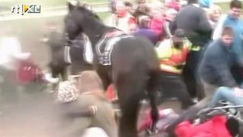 RTL Nieuws Renpaard verwondt zeven mensen