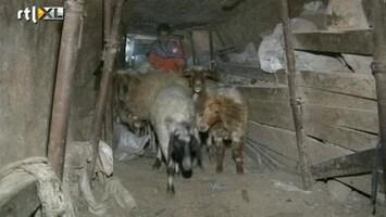 RTL Nieuws Ondergrondse schapensmokkel