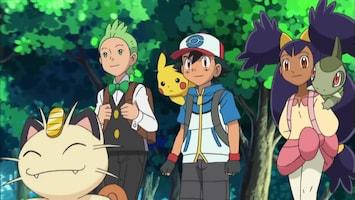 Pokémon Purrloin, schattig of stiekem?