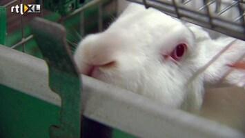 RTL Nieuws Schokkende beelden in konijnenstal